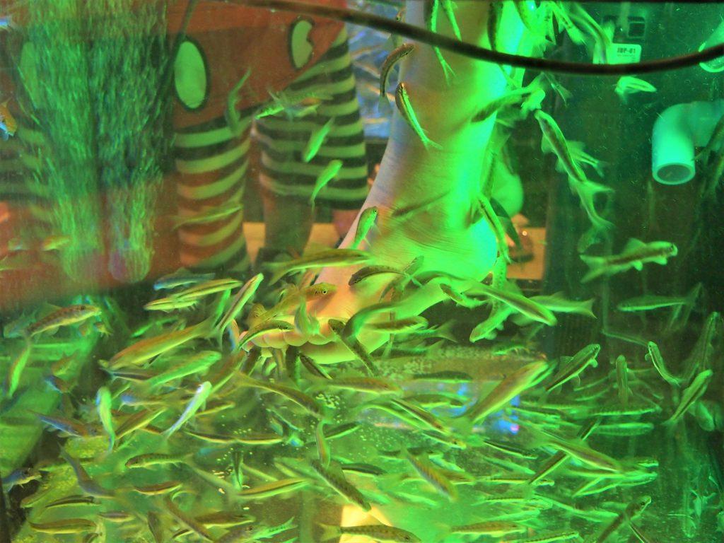 タイ、バンコクのリバーサイドにあるナイトバザール「アジアティーク」のドクターフィッシュ
