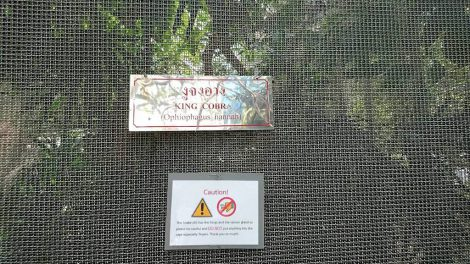 スネークファーム キングコブラ