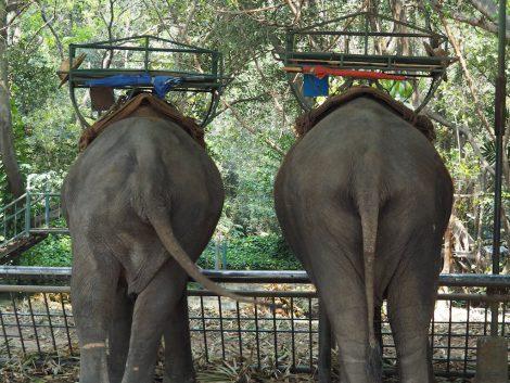 エレファントズー 象