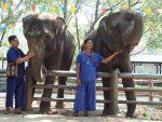 象に乗りたい! そんな願いが叶うバンコクから一番近い象園 「サンプラーン・エレファント・グラウンド&ズー」へ