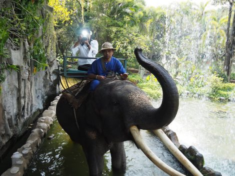 エレファントズー 象乗り 散歩