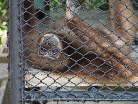 エレファントズー 珍しい猿
